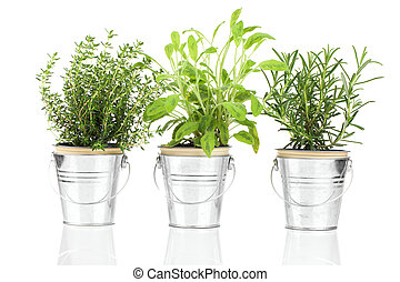 Sage, thyme and rosemary herb plant growing in a distressed ...