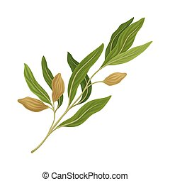Sage Twig as Kitchen Herb for Cooking Vector Element