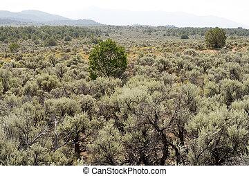 Sagebrush NM Desert Sangre De Cristo Mountains - Sagebrush ...