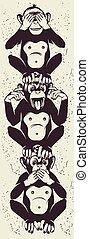 saggio, tre, scimmie