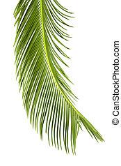 sago cycas leaf