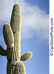 Saguaro Against Sky With Clouds