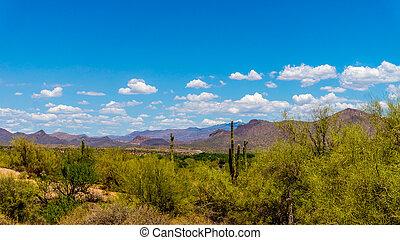 Saguaro Cacti in the Arizona Desert
