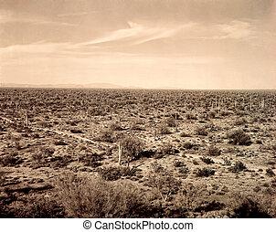 Saguaro Cacti Landscape