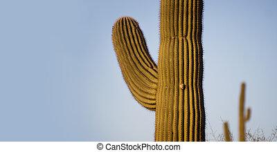 Saguaro Tree greeting banner American South West