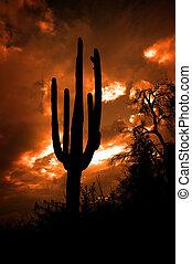 Saguaro Cactus Cacti Arizona Desert