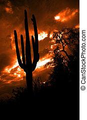 Saguaro Cactus Cactus Arizona Desert