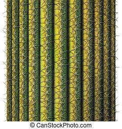 Saguaro Cactus - Digital illustration of a cross section of ...