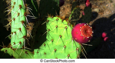 Saguaro cactus flower - Red flower on a saguaro cactus (...
