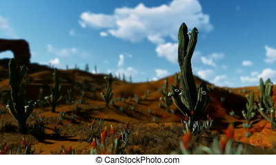 Saguaro Cactus in Desert against timelapse clouds, camera...