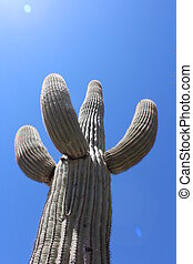 Saguaro Cactus with Sun
