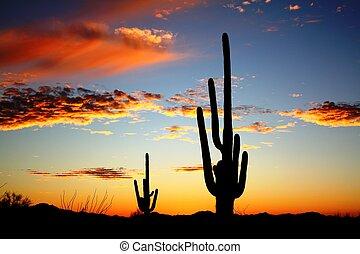 saguaro, cielo, desierto