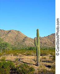 Saguaro Four