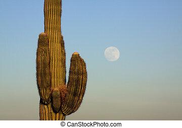 saguaro, luna llena