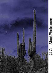Saguaro Mystique