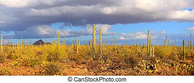 Saguaro national park - Panoramic view of Saguaro national...