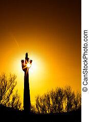saguaro, ondergaande zon , cactus, kleurrijke, bloeien
