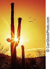 saguaro, silhouette, cactus, zonopkomst