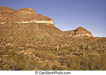 Saguaro Studded Mountain