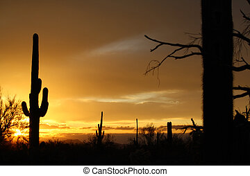 Saguaro Sunsets  - Sonoran sunset Tucson Az