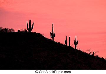 Saguaros on Hill at Sunrise