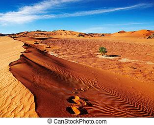 Sahara Desert, Algeria - Single tree in Sahara Desert,...