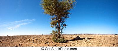 Sahara desert and the car