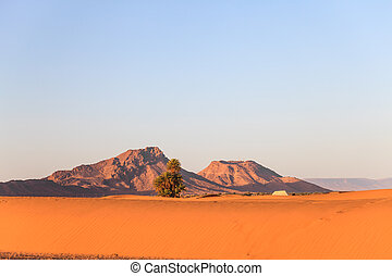 Sahara desert in the morning light