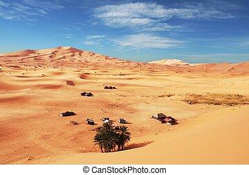 Sahara desert - Oasis in Sahara desert