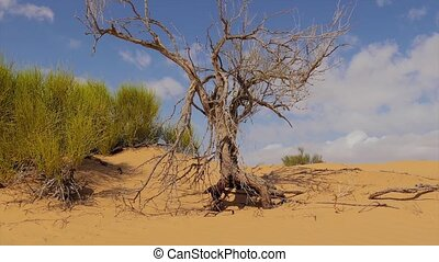 Sahara Landscape - Typical landscape of the Sahara Desert...