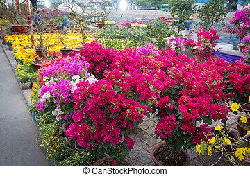 saigon, flor, año, vietnam, lunar, nuevo, mercado