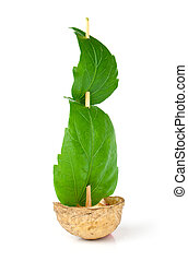 Sailboat made of walnut with a leaf as sail isolated on white background