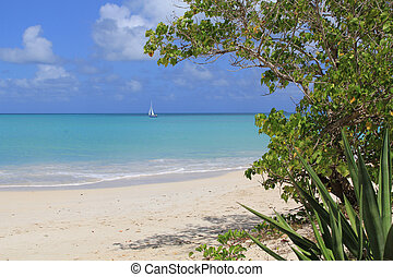 Sailboat on the Tranquil Caribbean