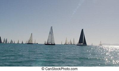 Sailboats ruling the ocean