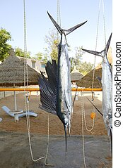 Sailfish catch hanging marlin fishing trophy