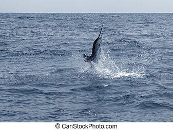 sailfish, deporte, agua salada, pesca, saltar
