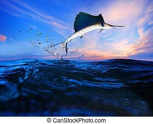 sailfish flying over blue sea ocean use for marine life and...