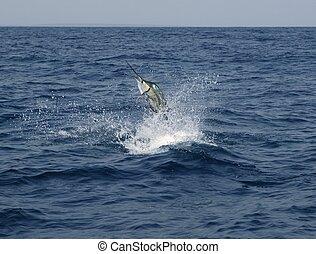 sailfish, sportende, saltwater, visserij, springt