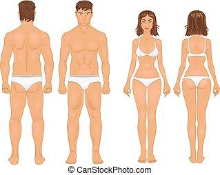 sain, corps, type, de, homme femme, dans, retro, couleurs