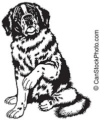 saint bernard black white - dog saint bernard breed, sitting...