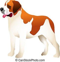 Saint Bernard - dog breed