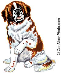 saint bernard dog - dog saint bernard breed, sitting pose,...