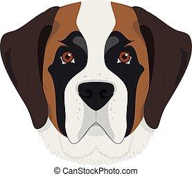 Saint Bernard dog isolated on white background vector...