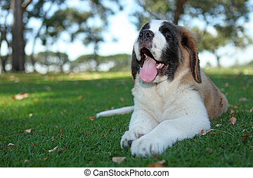 Puppy Dog Outdoors in the Grass