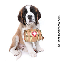 Saint Bernard Puppy Portrait