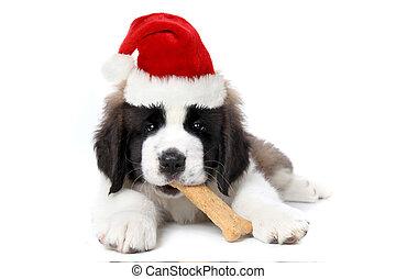 Saint Bernard Puppy Wearing Santa Hat