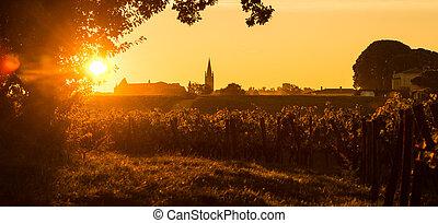 Saint Emilion Vineyard Sunrise France
