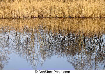 Saint Felix lake and reeds on winter time, Savoy, France