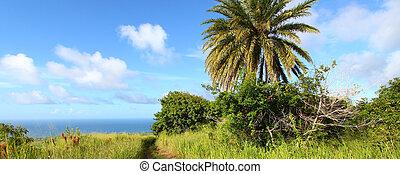 Saint Kitts Landscape