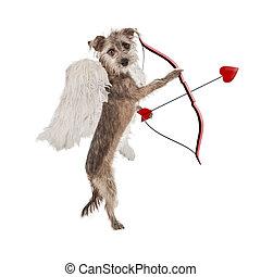 saint-valentin, cupidon, chien